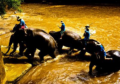 东南亚大象洗澡(3张)